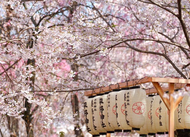 Japanese cherry blossom theme for Events