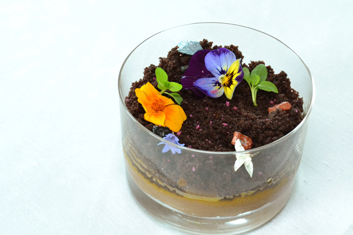 Chocolate terrarium - chocolate desserts